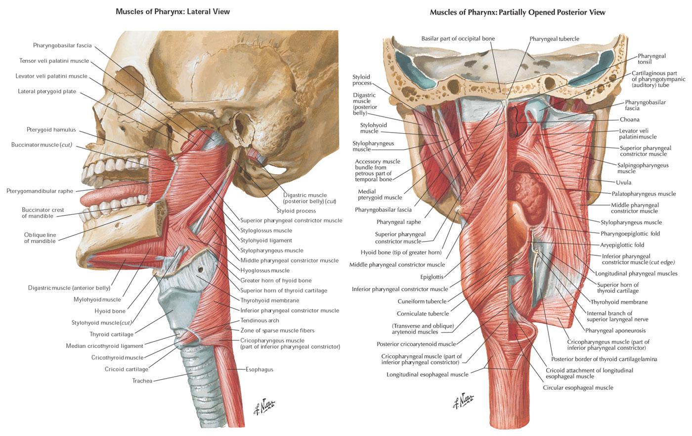 Figure 1 Upper Esophageal Sphincter Gi Motility Online