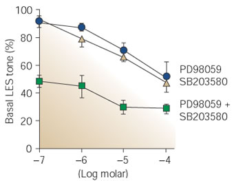Figure 8 | Signal transduction in lower esophageal sphincter ... on mtor inhibitor, protein kinase inhibitor, pi 3 kinase inhibitor, tyrosine kinase inhibitor, jak kinase inhibitor,
