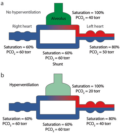Figure 10 | Anatomy, development, and physiology of the lungs : GI ...