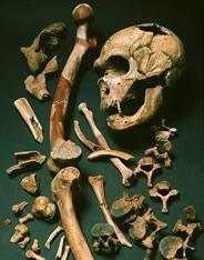 Neanderthals Skeleton