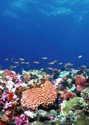 Coral will suffer as the oceans acidify.