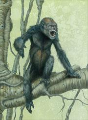 An artist's reconstruction of Pierolapithecus catalaunicus.