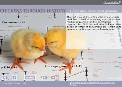 Click here to follow the history of the chicken, from its origins among the dinosaurs until today.   type='special