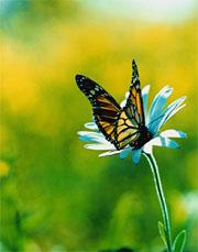 If observing the world tends to change it, how come we all see the same butterfly?
