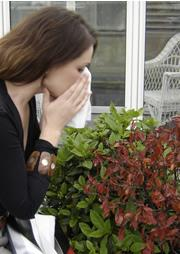 Sniffles be gone: self-hypnotism may provide a partial cure to hay fever.
