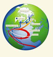 The Atlantic Ocean circulation system. Click here to see enlarged view.