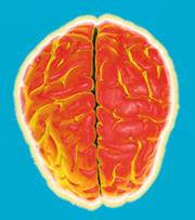 Mis-folded prions may cause brain disease; but what do the normal ones do?