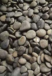 Mature pebbles stay the same basic 'shape' even as they get smaller with age.