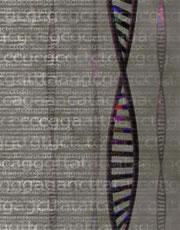 Genetic information from 36 people around the world has mapped out a new chart of the genome.