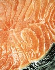 Salmon, like all seafood: predicted to collapse by 2048.