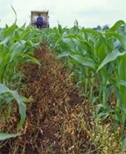 Crops can be damaged or destroyed by counterfeit chemicals.