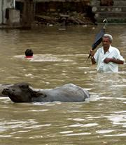 India's monsoon rains are behaving ever more bizarrely.