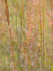 Prairie grasses: even if you burn them, they suck up more carbon dioxide from the air than is released.