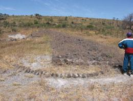 Vegetation threatens to erode the trail of fossilized footprints at Laetoli in the Ngorongoro National Park, Tanzania.