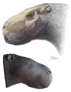 Rodent of unusual size discovered : Nature News