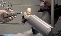 monkey and prosthetic arm