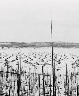 In 1929, more than 20 years after the explosion, dead trees at Tunguska stand witness to the scale of the event.