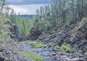 The Churgin creek flows past Tunguska's epicentre, its forests regrown.