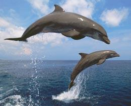 A Dolphin | How To Sex A Dolphin Nature News