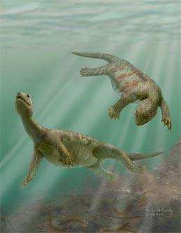 Artists impression of Odontochelys semitestacea