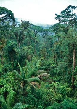 africa rainforest