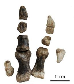 The hand of the Limusaurus inextricabilis
