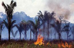 Cash incentives could be part of a multi-pronged approach to stopping slash-and-burn deforestation.