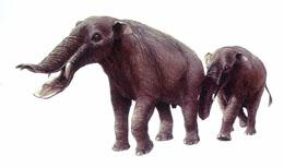 The gomphothere was likely hunted by the Clovis people.