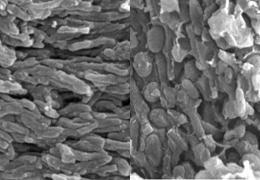melanosomas em penas fósseis @ Nature