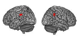 Brain regions responsible for spirituality