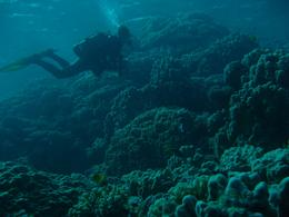 Divers explore Red Sea coral reefs