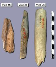 This picture shows three bones (Vi33.16, Vi33.25, Vi33.26) from Vindija cave, Croatia. Most of the Neandertal genome sequence was retrieved from these bones.