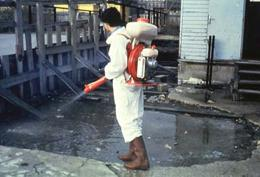 Anti-malarial spraying: A biological pesticide, containing  Bacillus thuringiensis, is sprayed onto stagnant water which is a  potential breeding site for the mosquito vectors of malaria. 1990