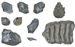 hominin tools