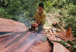 A logger slices wood with a chainsaw at an unregistered logging site in Aceh Besar, Indonesia, Wednesday, July 19, 2006.