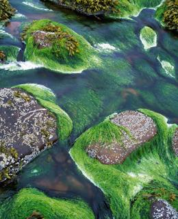algae biodiversity cleans streams nature news