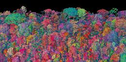 A three-dimensional image of a forest in Panama, based on data from the Carnegie Airborne Observatory. The retooled observatory will be far more sensitive.