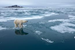 A link between receding sea ice and polar-bear deaths has sparked political fallout.
