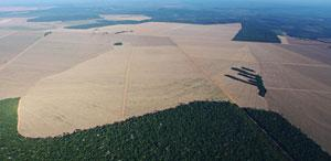 Soya bean farming in the Amazon is rising along with food prices, contributing to an increase in the rate of deforestation for the first time in years.