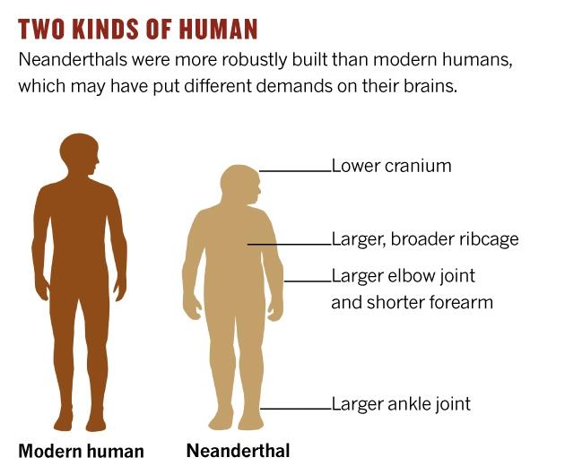 neanderthal-comparison 630×530 pixels | pre-p.s.grendel= pan, Skeleton