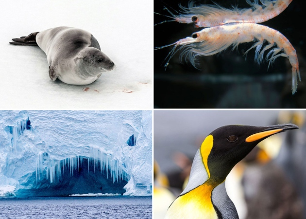 @ Nature/Bob Zuur/WWF and Konrad Wothe/Getty