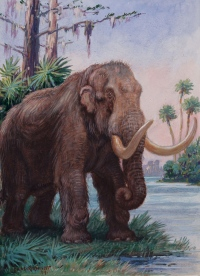 Fossils of mastodons and mammoths found at a site in Colorado may have come from animals that became trapped in 'quicksand' during an earthquake.