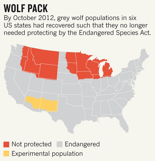 Grey Wolves Left Out In The Cold Nature News Comment - Maps of the location of wolves in the us