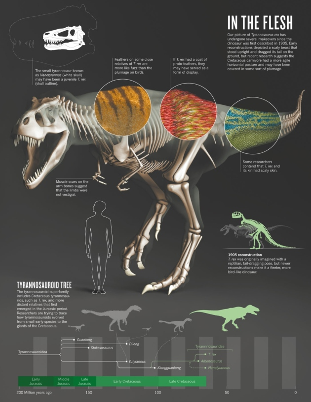 Palaeontology: The truth about T. rex : Nature News & Comment