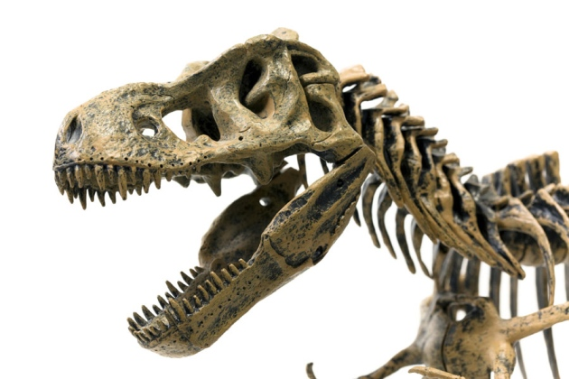 tyrannosaurus rex research paper Between a t rex's powerful jaws, bones of its prey new research suggests that the tyrannosaurus rex crushed its the lead author on the paper.
