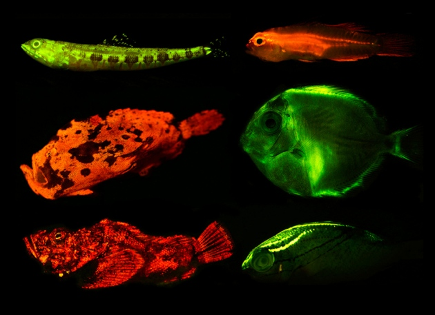 Fish Flaunt Neon Glow Nature News Comment