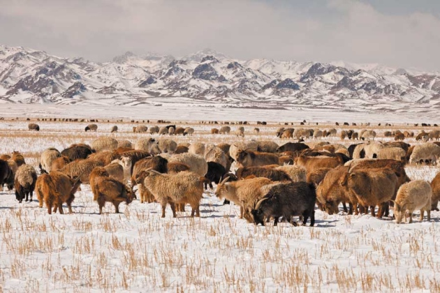 Agriculture Steps To Sustainable Livestock Nature News Comment
