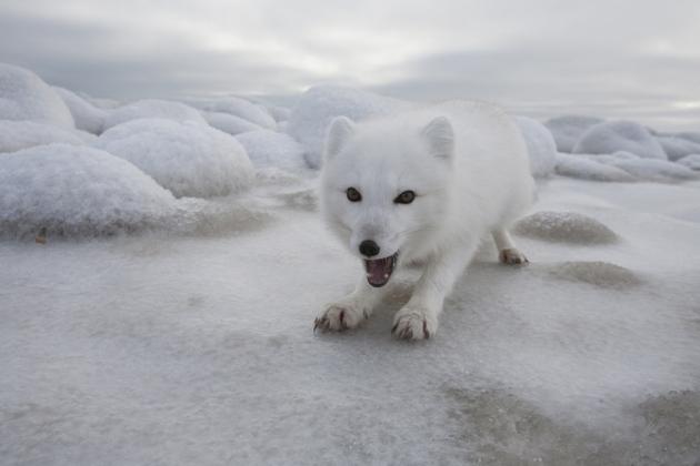 @ Nature/Matthias Breiter/Minden Pictures/FLPA