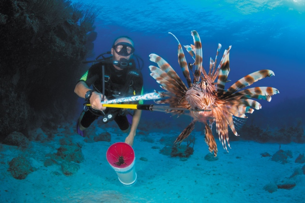 Cyprus Devises a Plan to Cull Invasive Lionfish