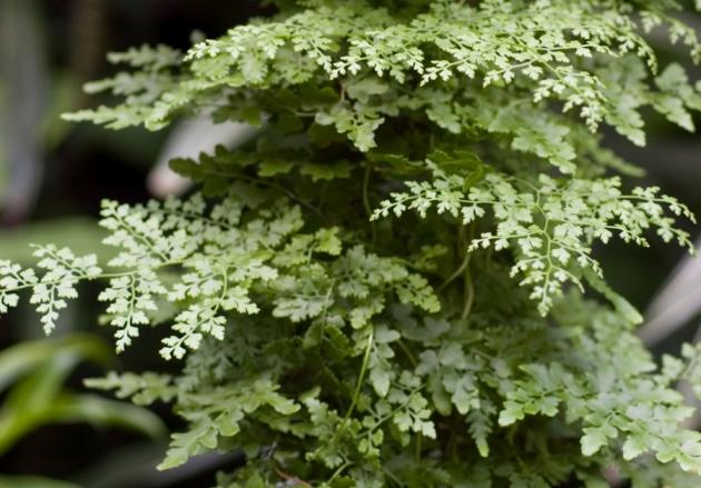 @ Nature/Organica/Alamy